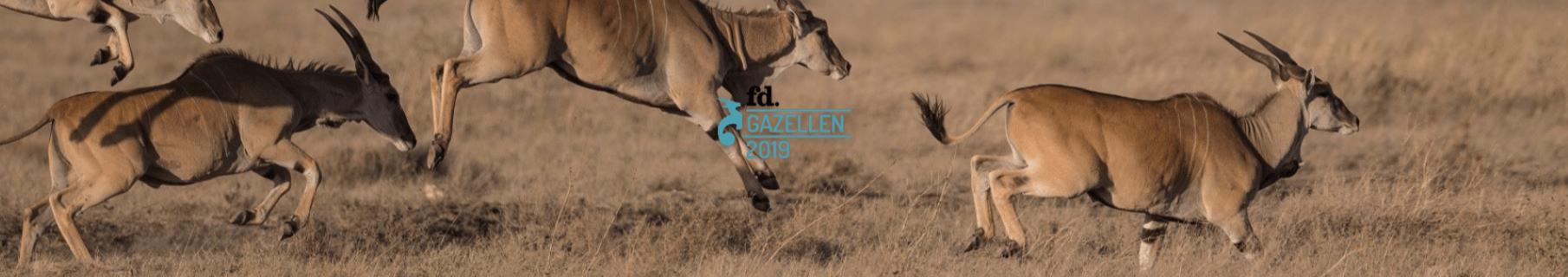 Gazelle-7-compressor