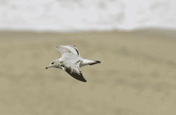 Snippet-vogelvlucht